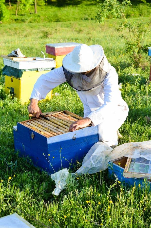 人检查他的蜂箱子的蜂老板在森林附近 库存照片