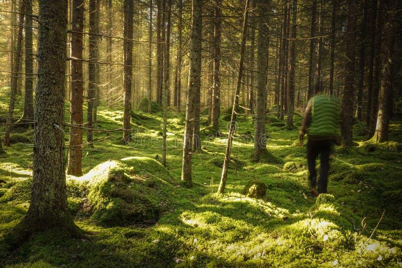 人步行在生苔绿色森林里 免版税库存图片