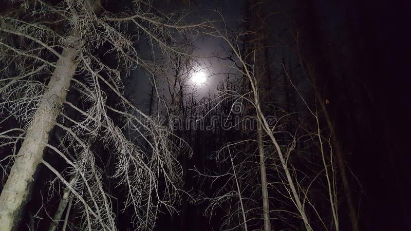 令人毛骨悚然的月亮 免版税图库摄影