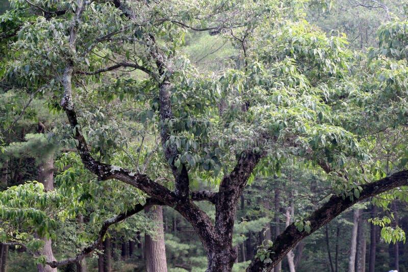 令人毛骨悚然的树 免版税库存照片