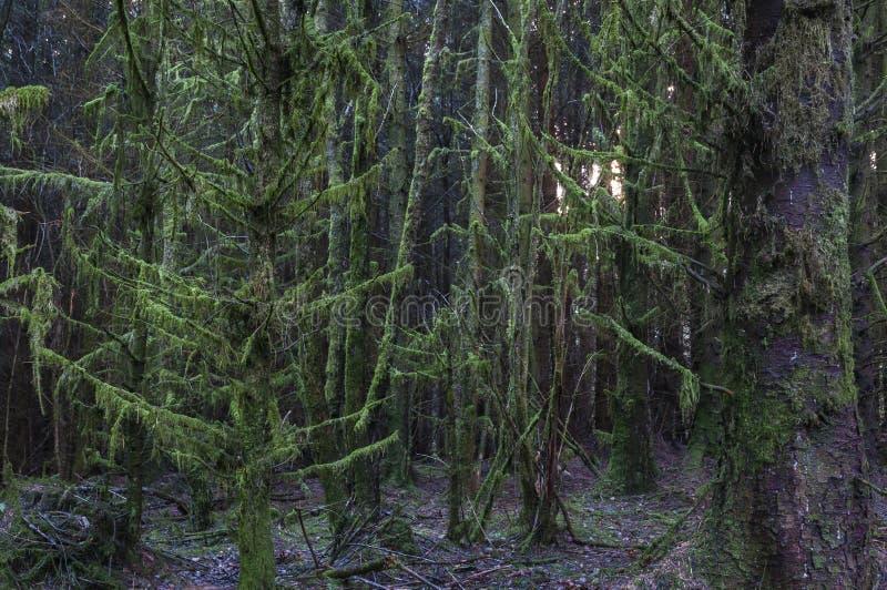 令人毛骨悚然的树 免版税库存图片