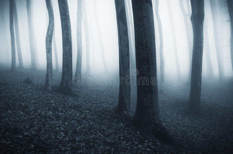 令人毛骨悚然的蓝色雾低谷树在森林里在万圣夜 免版税库存图片