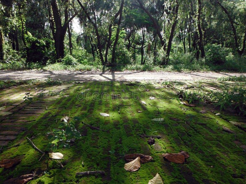 令人毛骨悚然的阳光通过在蓝毗尼,菩萨出生地的树  免版税图库摄影