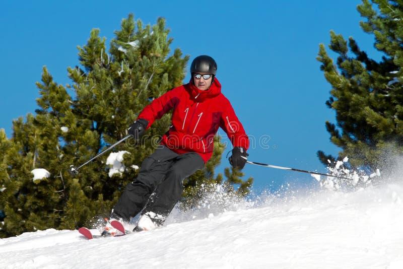 人滑雪结构树 库存图片