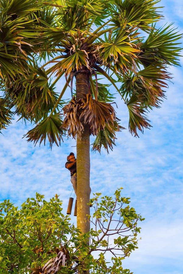 人爬棕榈树 库存照片