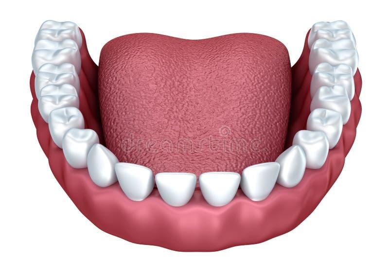 人的假牙3D图象 皇族释放例证