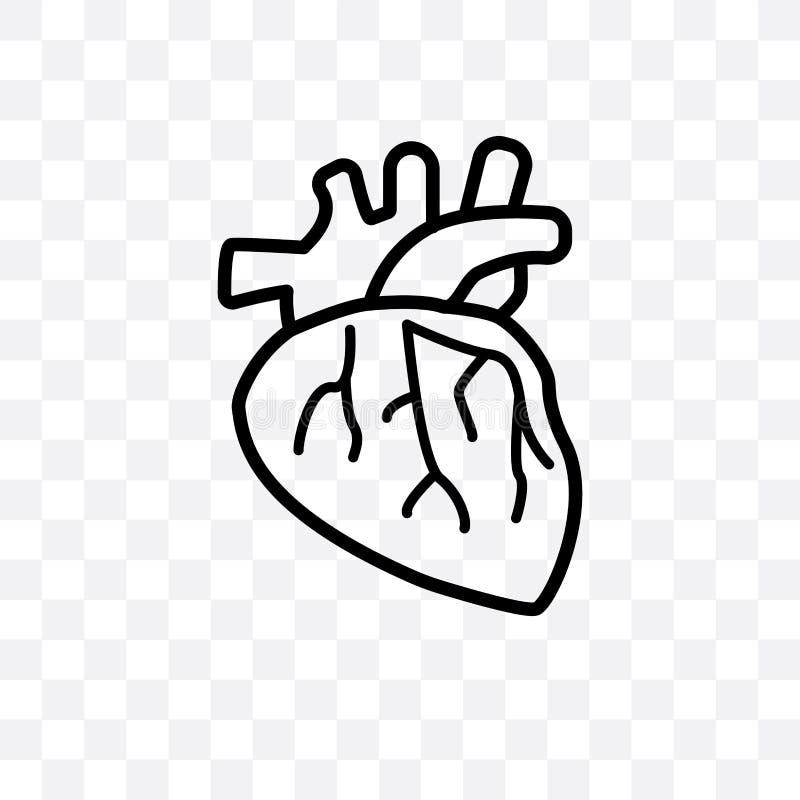 人的在透明背景隔绝的动脉传染媒介线性象,人的动脉透明度概念可以为网和mobi使用 皇族释放例证