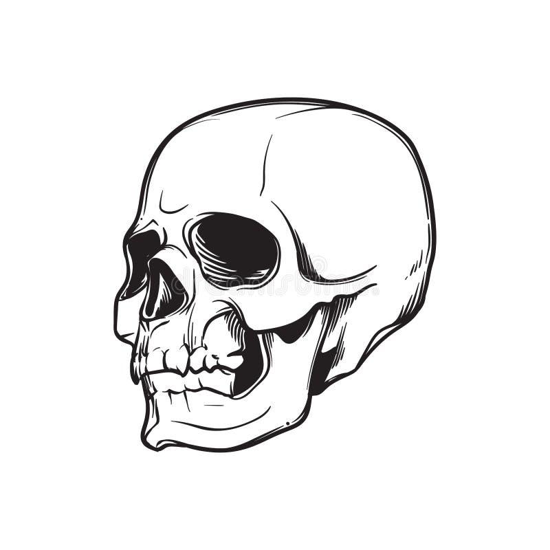 人的头骨手图画 在树扎营角度 在白色背景隔绝的黑线性图画 向量例证