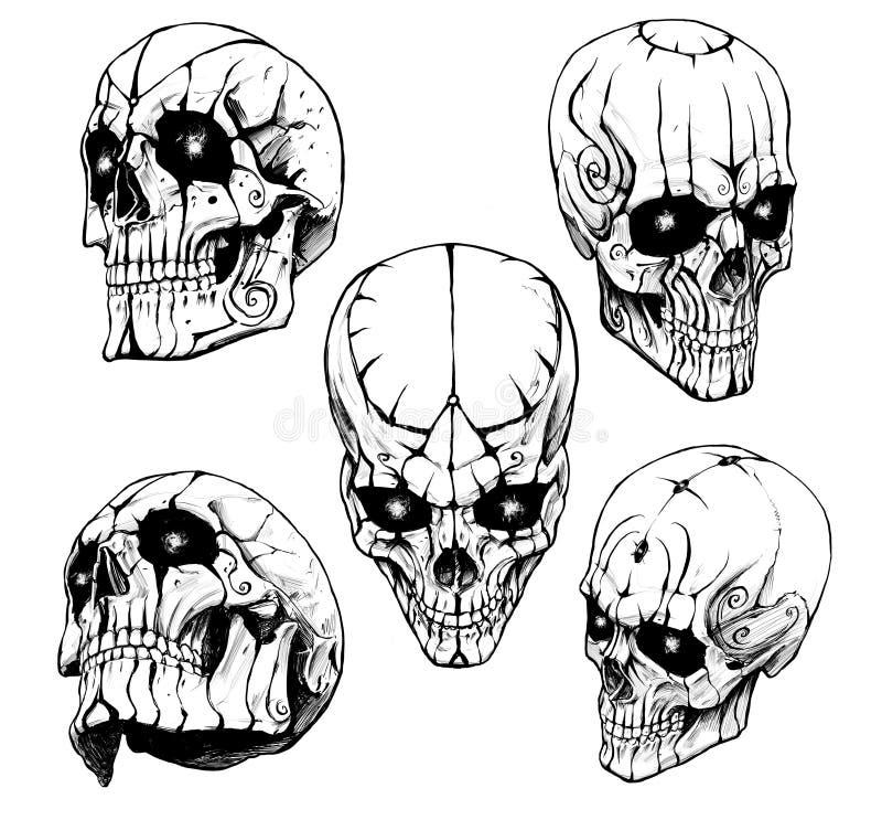 人的头骨的汇集 库存例证