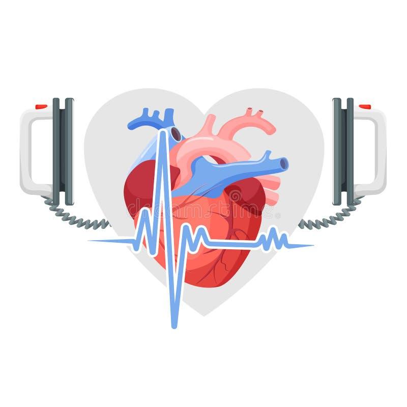 人的心脏、现代cordiagram去纤颤器和片断  皇族释放例证