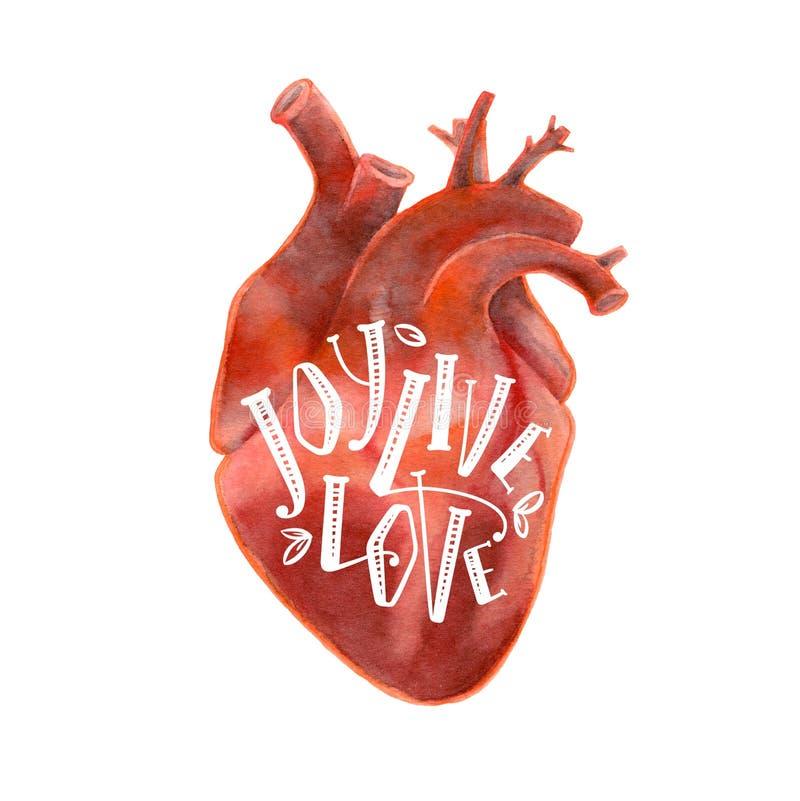 人的心脏现实剪影与字法的 库存图片