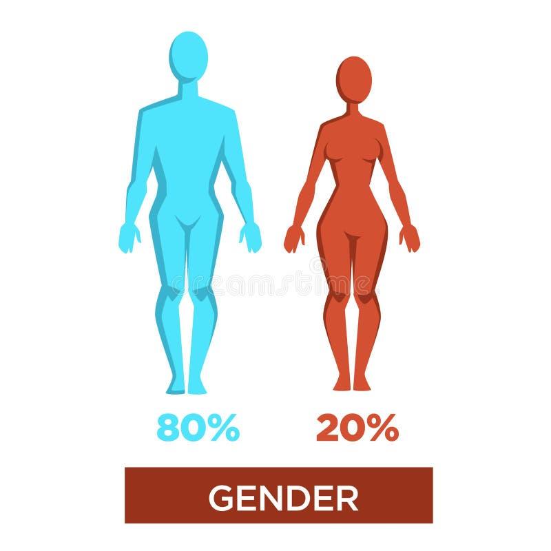 人的性别百分比阳刚之气和阴物传染媒介例证 库存例证