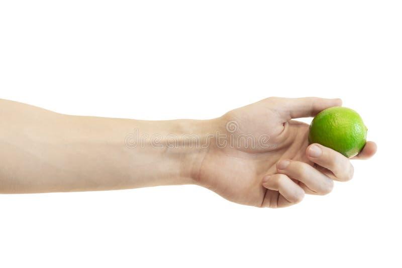 人的手在白色背景给或拿着整个石灰被隔绝 水多的绿色石灰 免版税库存照片