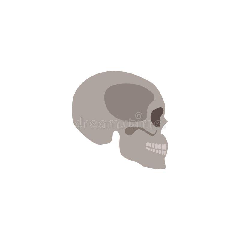 人的最基本的平的传染媒介例证顶头骨头隔绝的头骨 向量例证