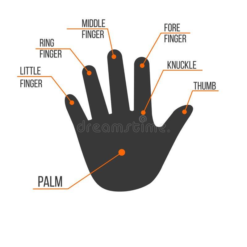 人的棕榈手,传染媒介在白色背景隔绝的例证例证的手指名字 向量例证