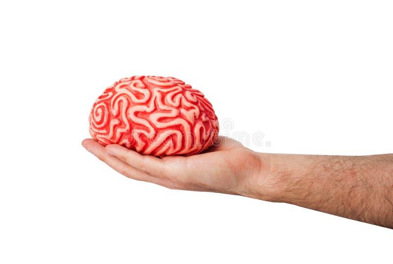人的橡胶脑子在手上 库存图片
