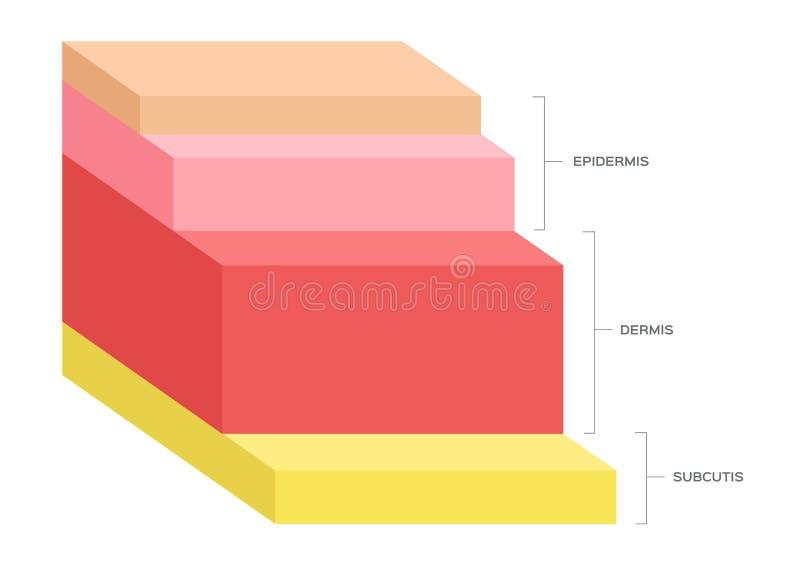 人的皮肤层数 向量例证