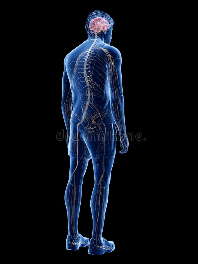 人的神经系统 皇族释放例证