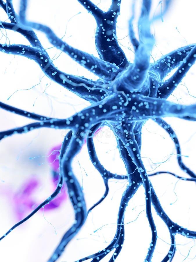人的神经细胞 皇族释放例证
