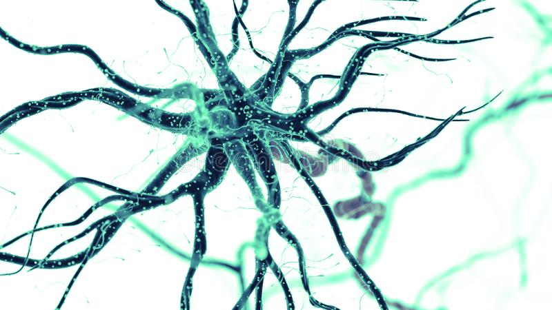 人的神经细胞 库存例证