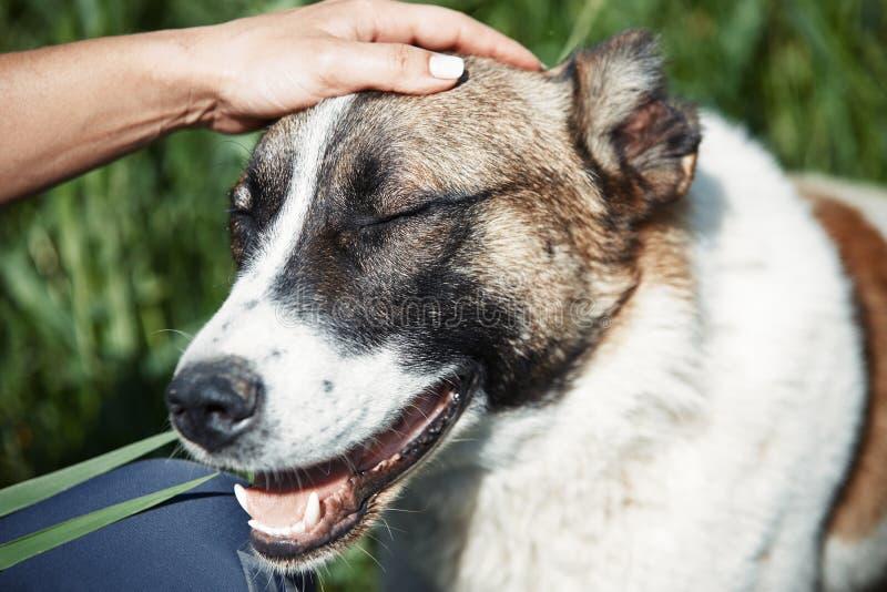 人的纵容的狗 免版税库存照片
