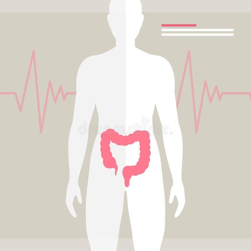 人的肠健康例证 库存例证