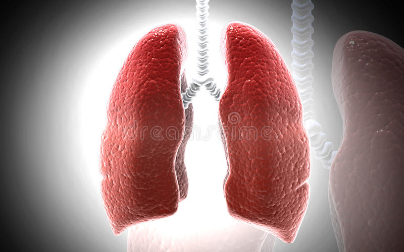 人的肺 向量例证