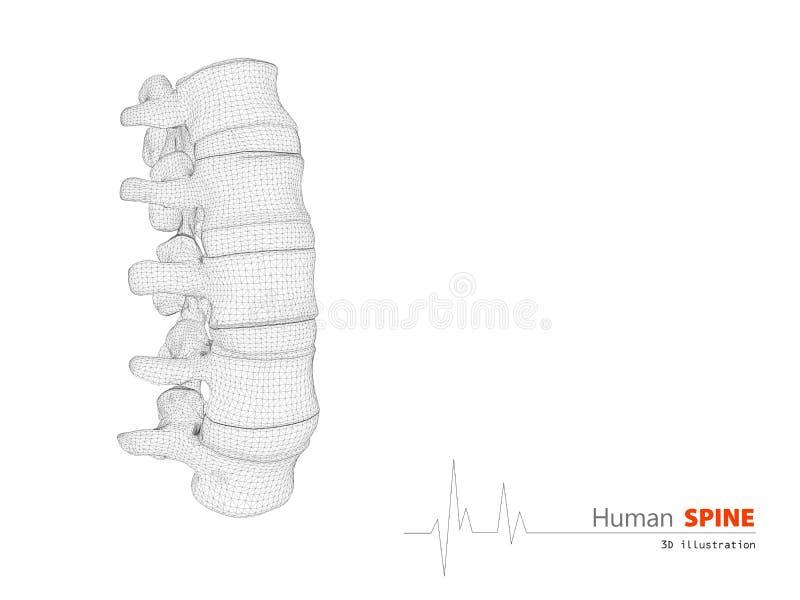 人的脊椎摘要科学背景的例证 皇族释放例证