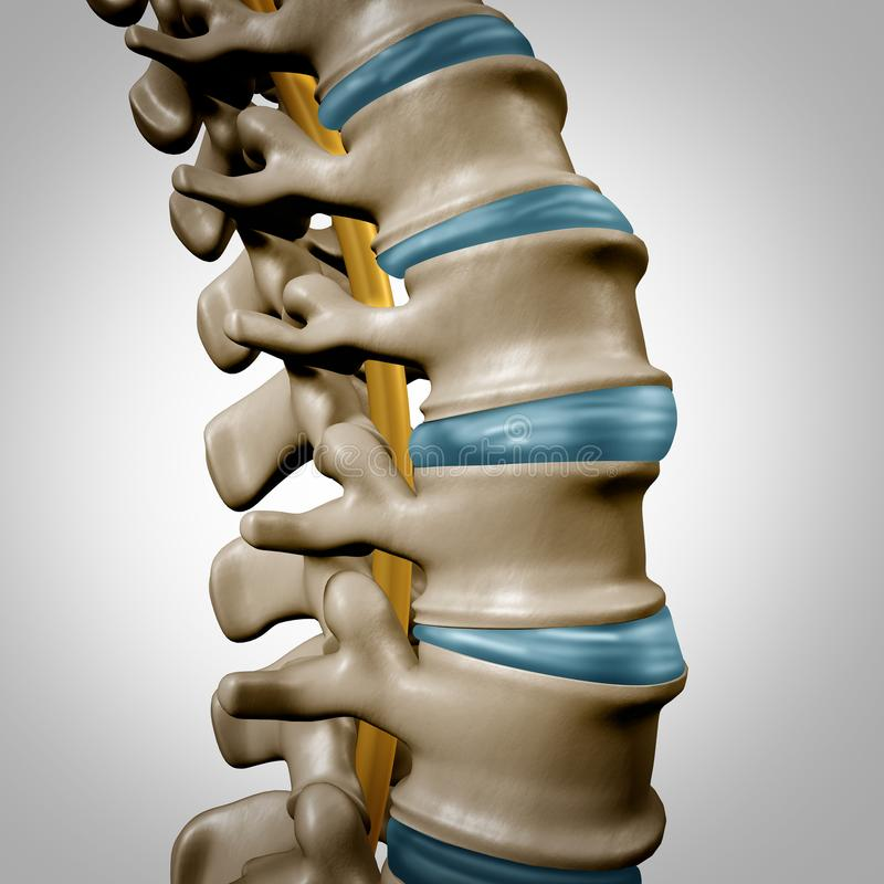 人的脊椎解剖学部分 库存例证