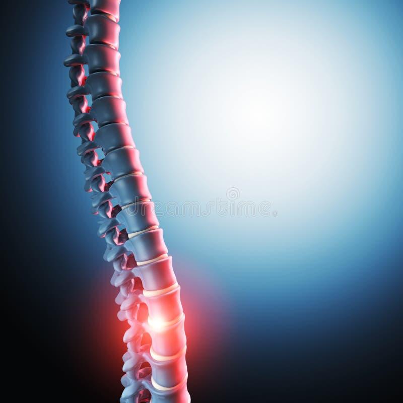 人的脊髓骨头3d 向量例证