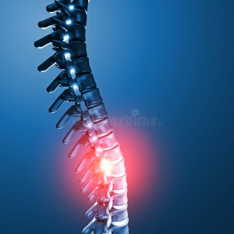 人的脊髓骨头3d 皇族释放例证