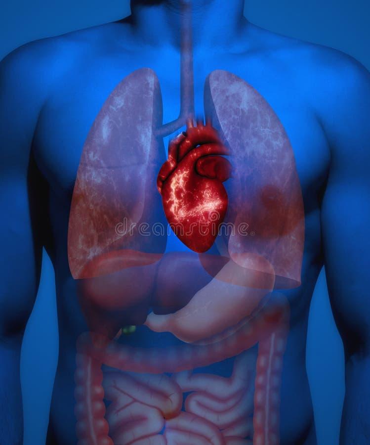 人的解剖学 重点浅粉红色的钢样式 库存照片
