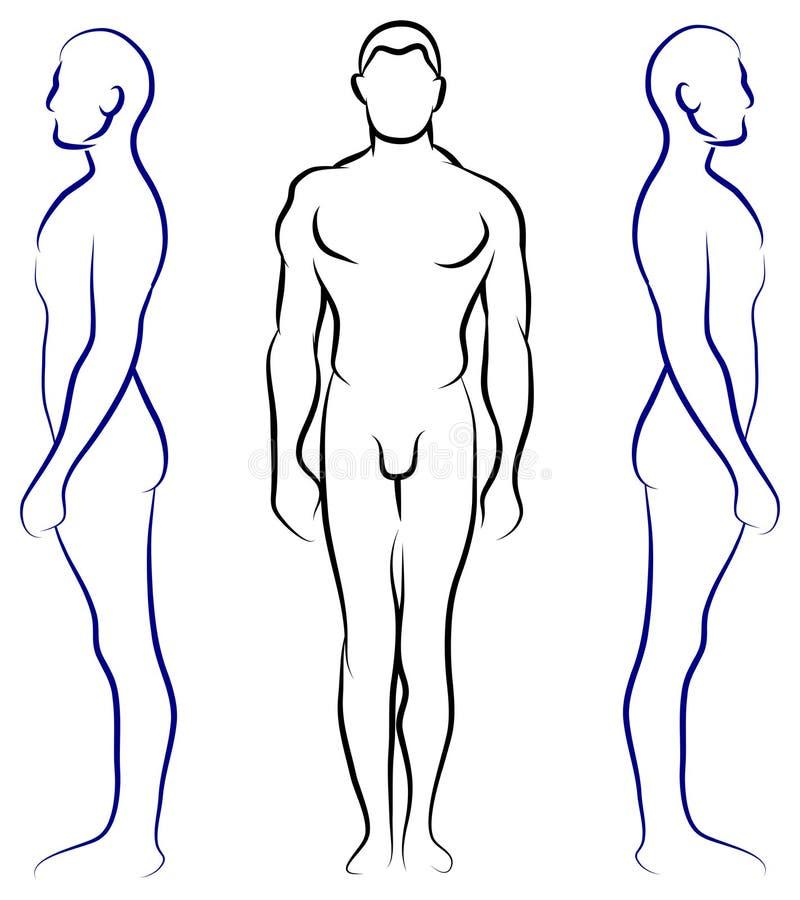 人的解剖学 库存例证