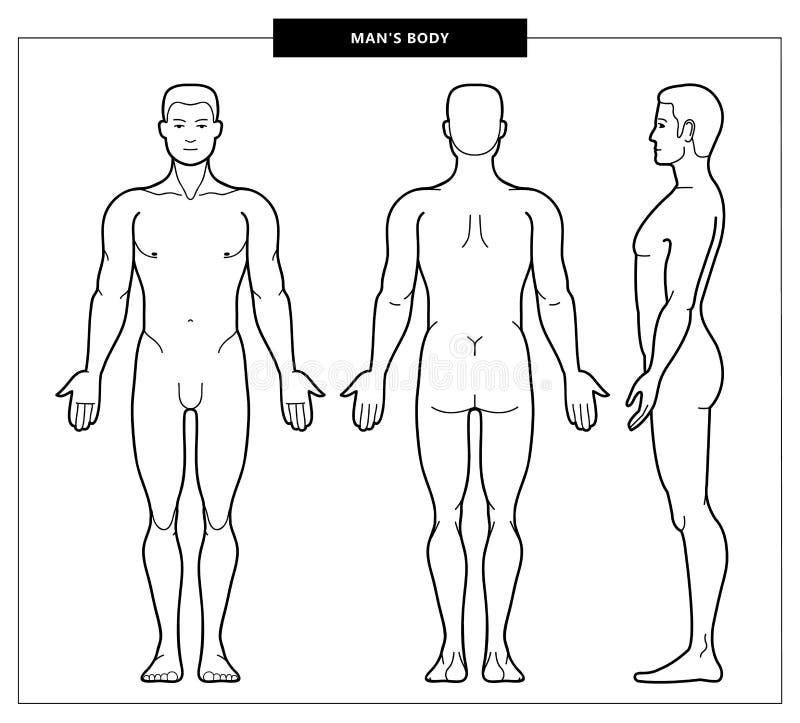 人的身体和解剖学 皇族释放例证