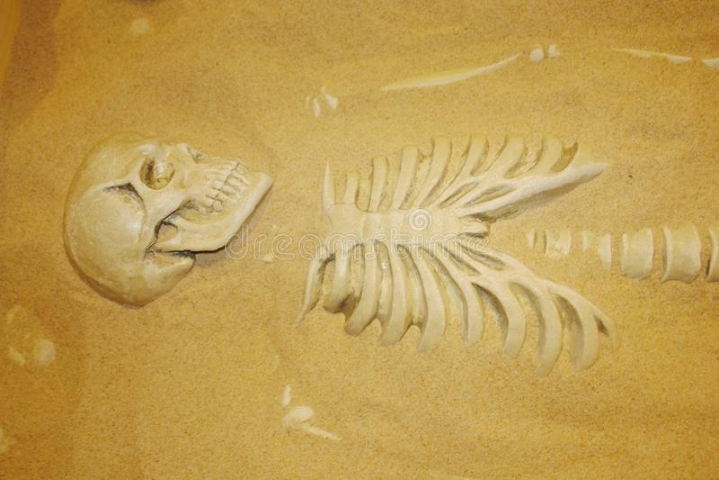 人的遗骸的考古学挖掘在沙子的 古老人的骨骼和头骨 博物馆'生活系统的在莫斯科 免版税库存图片
