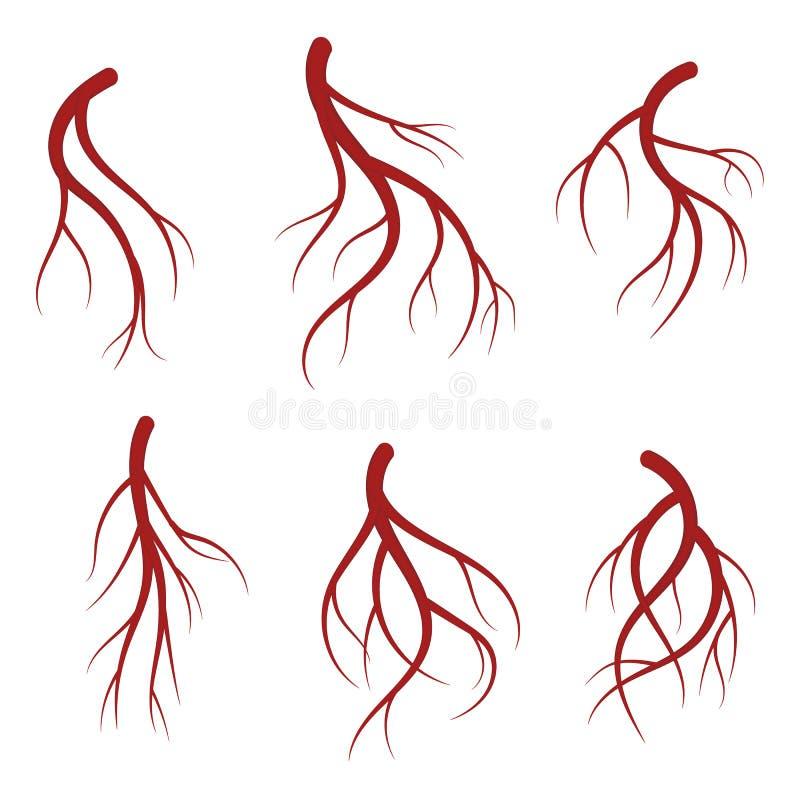 人的静脉,红色血管现实传染媒介医疗例证 库存例证