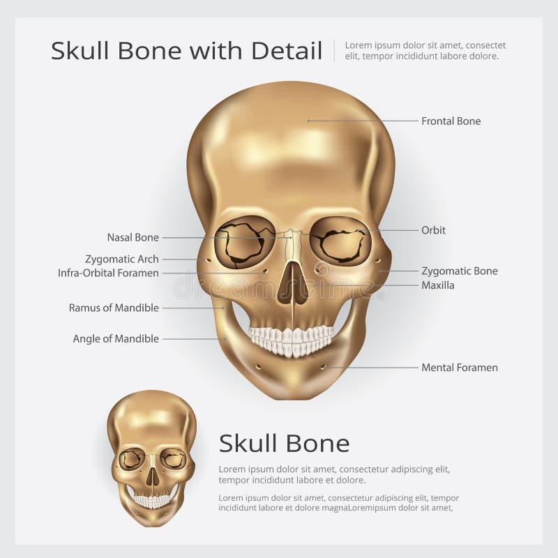 人的骨头头骨解剖学 向量例证