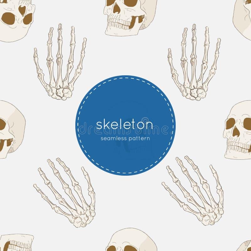人的骨骼,无缝的样式传染媒介 皇族释放例证