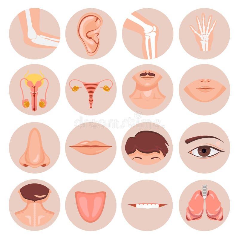 人的鼻子、耳朵、嘴头发和眼睛脖子后面舌头牙thoart锁骨嘴唇刮胡须膝盖手肘腕子损伤男性 库存例证