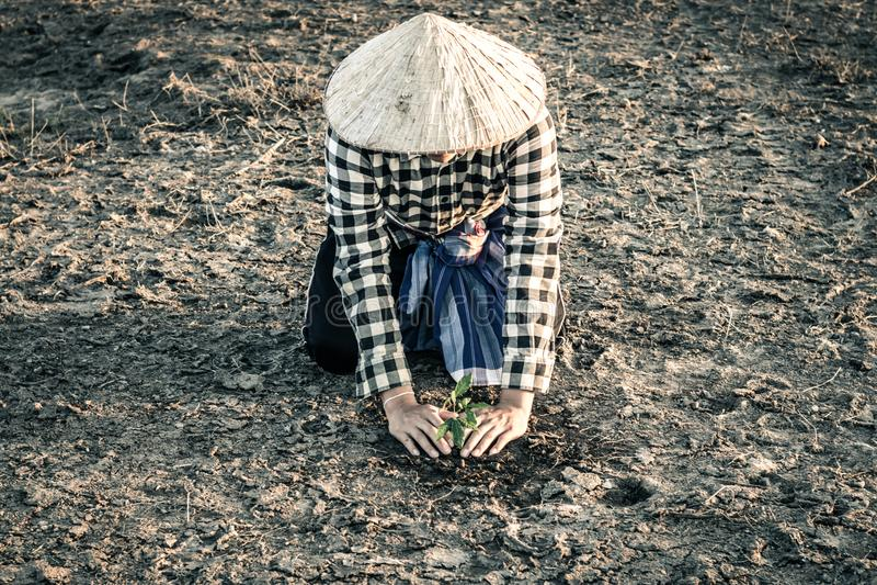人种植了在遭受干旱的土地的一棵树 免版税库存图片