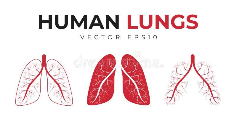 人类肺 Set of icons and medical symbols, human lungs with abstract structure 皇族释放例证