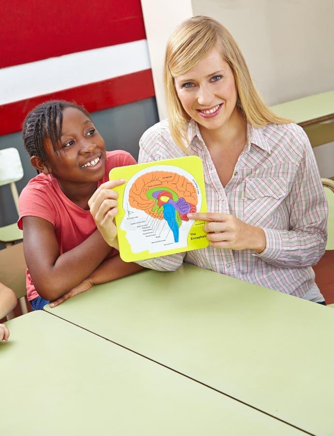 人脑模型在学校 免版税库存图片