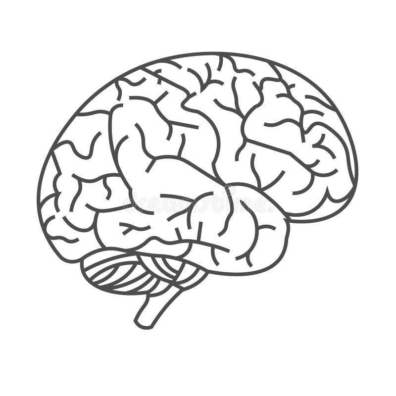 人脑的传染媒介图象与黑线的在白色背景 库存照片