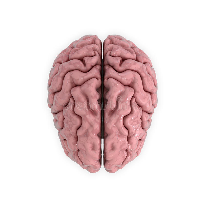 人脑的Medicall例证 向量例证