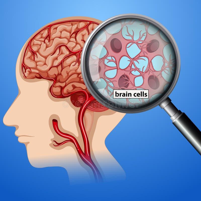 人脑细胞解剖学 皇族释放例证