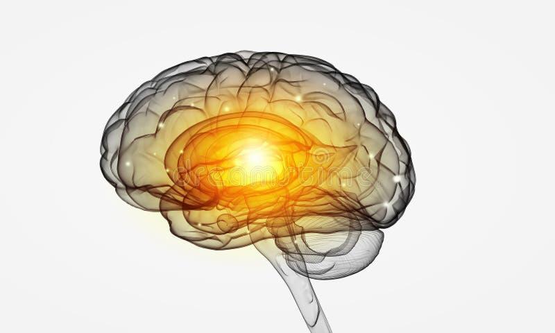 人脑 库存例证