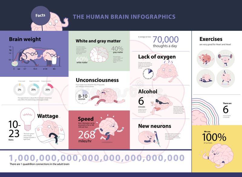 人脑infographics 向量例证