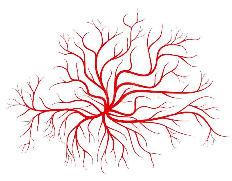 人血静脉,红色船导航例证 向量例证