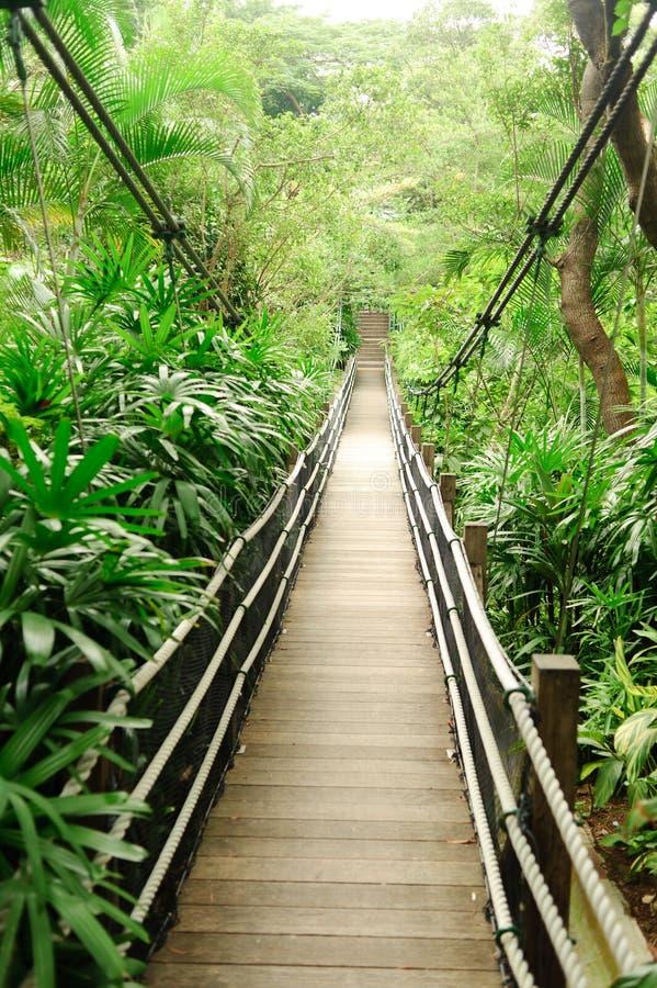 Download 人行桥 库存图片. 图片 包括有 浏览, 人行桥, 结构树, 旅行, 步行者, 高涨, 热带, 植物群, 平静 - 22354625