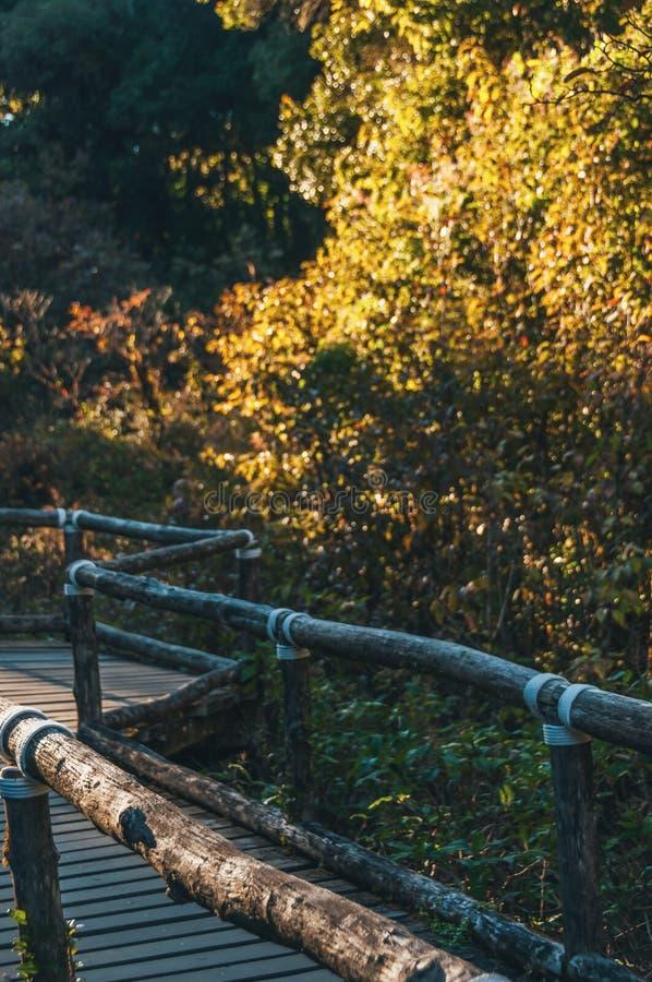 人行道在土井Intanon nationalpark的,清迈,泰国雨林里 白天,山 图库摄影